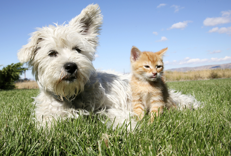 Rates and Services including Pet Sitting and Dog Walking